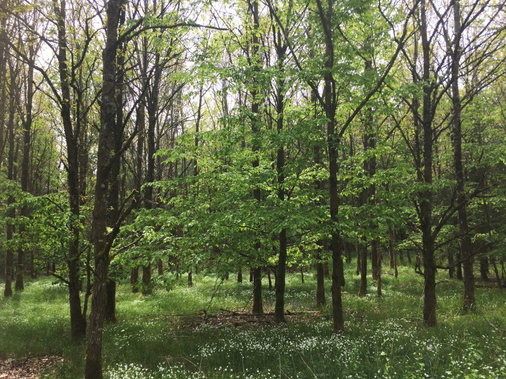 Ein Spaziergang im Wald. Tief durchatmen ausdrücklich empfohlen.